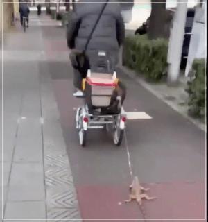 イグアナ 引きずり 散歩 虐待 動画
