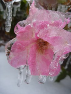 ice days 057