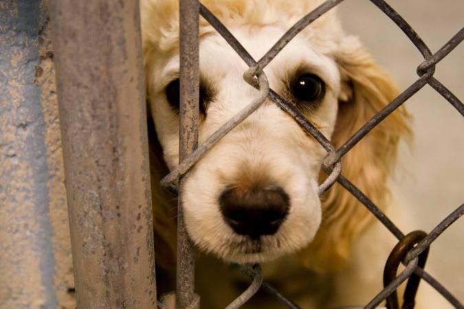 Piden año y medio de cárcel a una pareja por maltrato animal