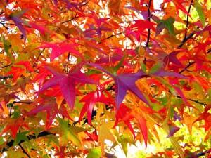 leaves-18051_1280