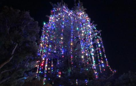 Camarillo's Annual Holiday Tree-dition