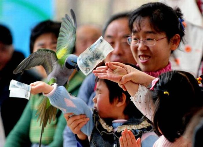 Bird  Sports Meeting in China (13 pics)