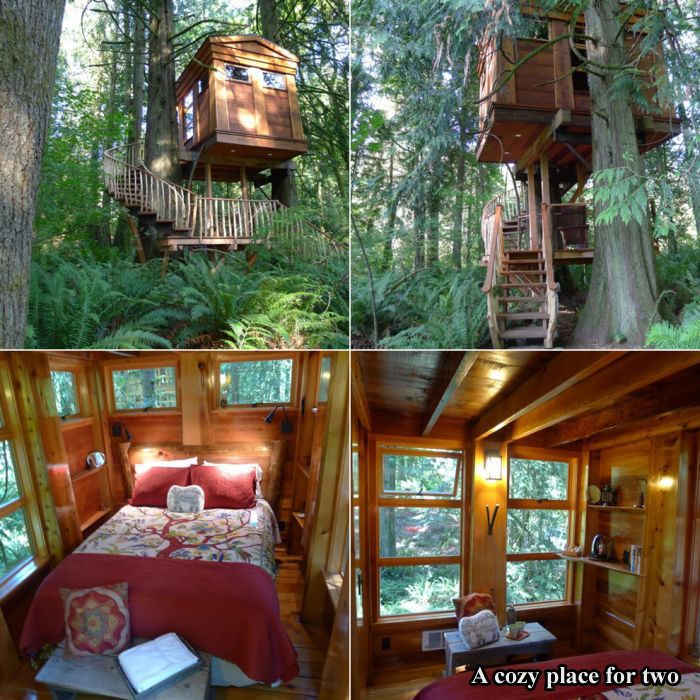 Tree Houses For Adults 17 pics