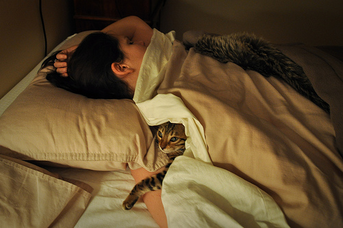 acordar-com-gato