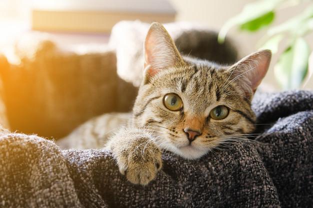 Koronavirüs döneminde evcil hayvan sahipleri nelere dikkat etmeli?