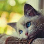 Kedilerin ne hissettiğini anlayabilmek için bilmeniz gerekenler