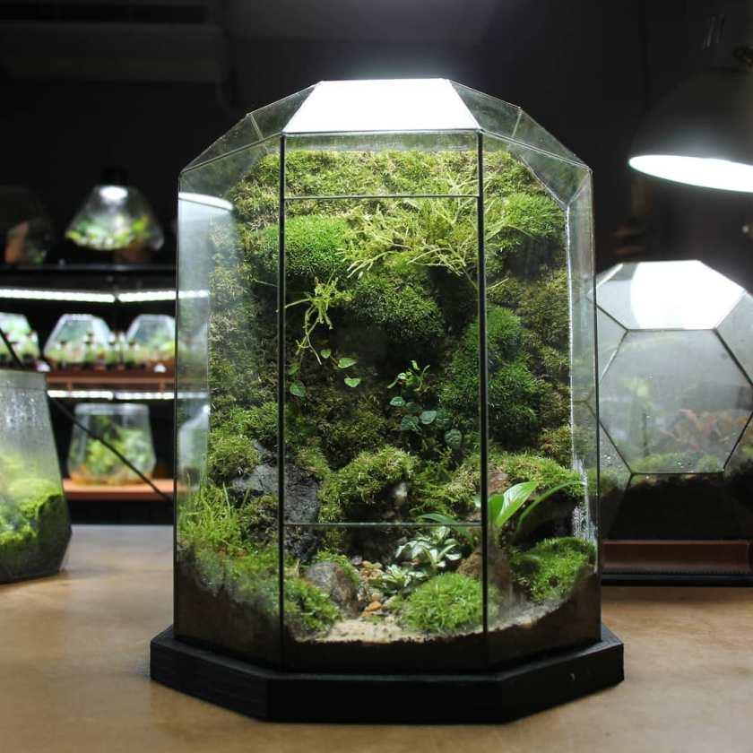 moss Terrarium Ideas exo terrarium plants sustain self