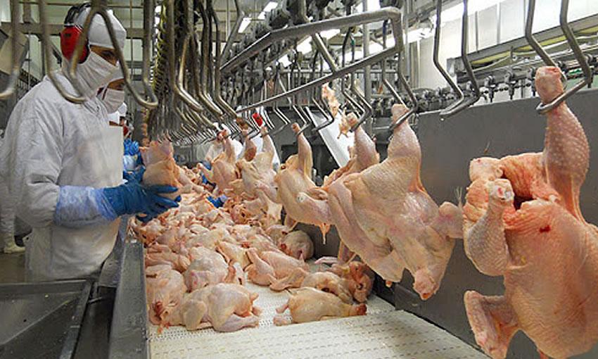 Anúncio de redução do ICMS do frango congelado no Acre gera polêmica com a Acreaves