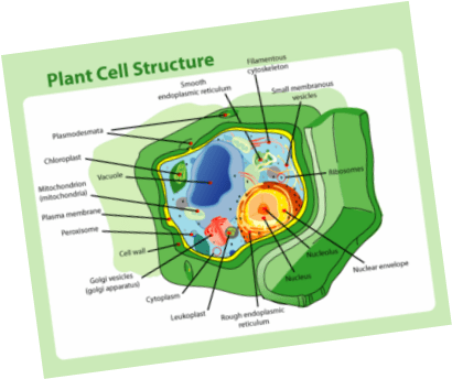 3d animal cell coloring diagram briggs and stratton 6 hp carburetor science seventh grade project task 1 pre test