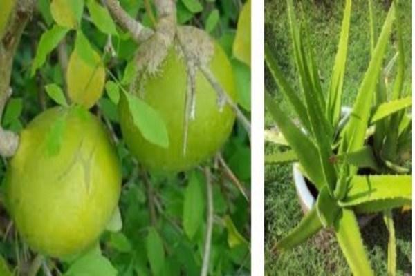 Lemon and Aloe Vera Mask