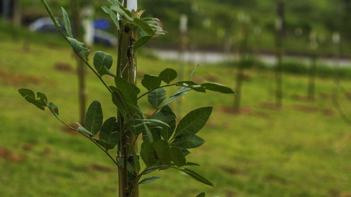 Semana do Meio Ambiente será lembrada com Oficina ODS Objetivos de Desenvolvimento Sustentável