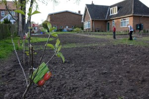 New Fruit Trees and the Open Space Revealed