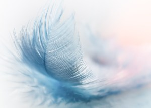 Blue Feather prompt pic