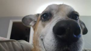 Can A CT Landlord Be Sued For A Dog Bite