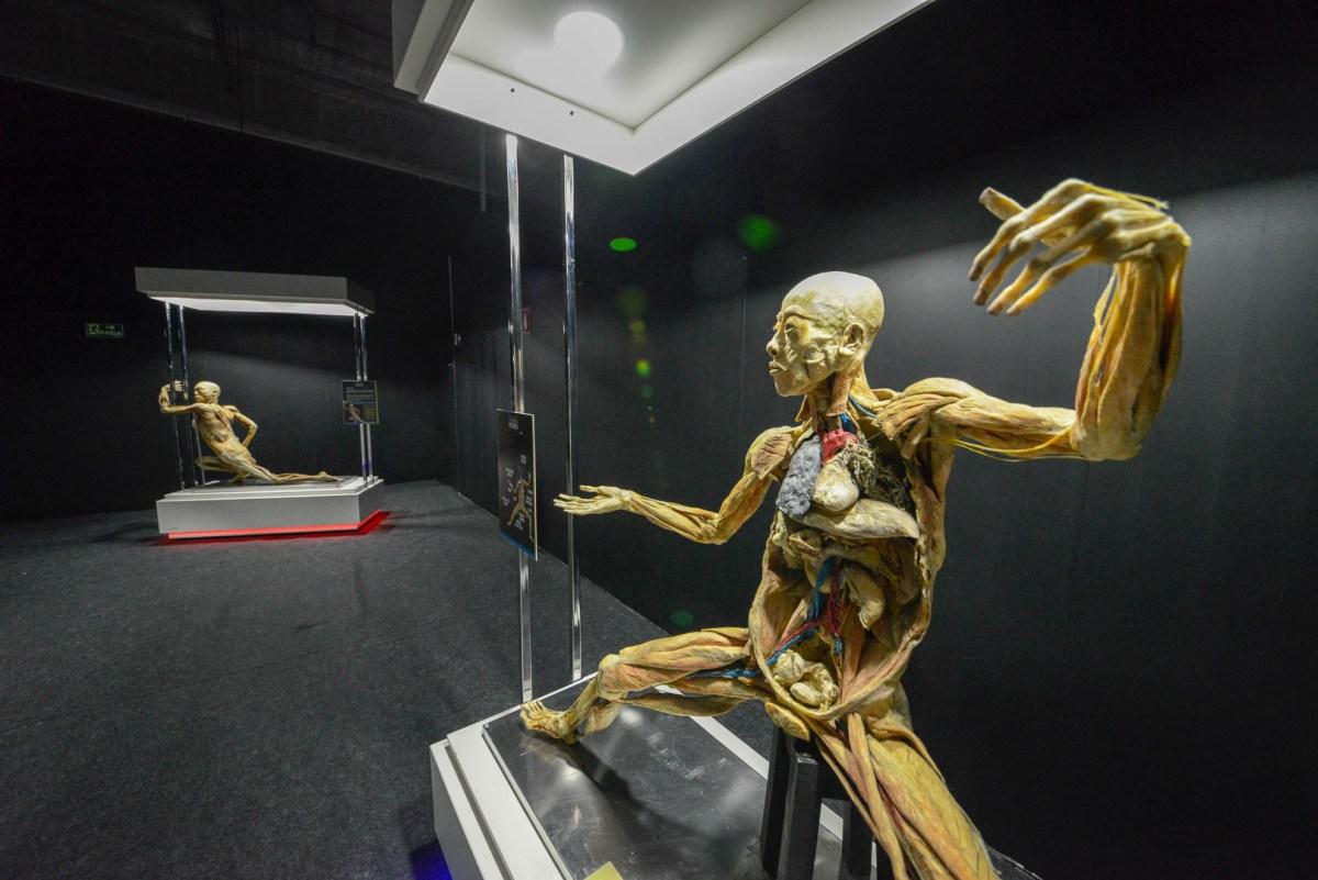 Exposição Maravilhas do Corpo Humano termina domingo (23)