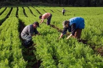 Foto de plantação