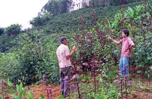 foto do Banco de hortaliça em Manhuaçu (Foto: Emater-MG/Divulgação)