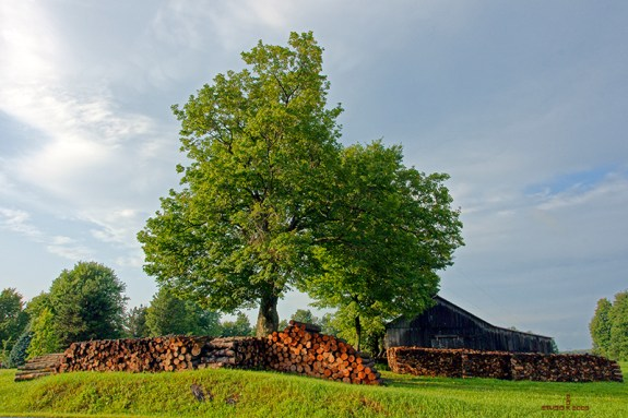 Firewood_45
