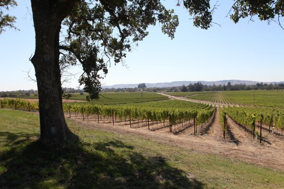 Scribe_Winery_14