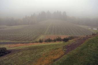 youngberg-hill-viny-1-09b
