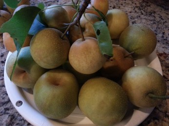 Pears from the yard.