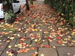 Folhas na calçada de Gramado