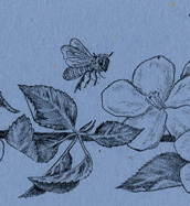Honey Bee and Apple Blossoms Bookmark