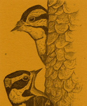 Downy Woodpecker Bookmark