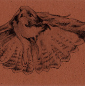 Red-tailed Hawk Bookmark
