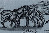 Zebras Bookmark