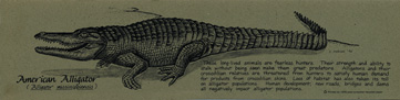 American Alligator Bookmark