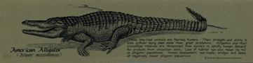 American Alligator Bookmark