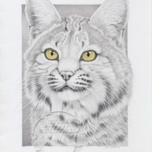 Bobcat Notecard