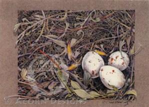 Meadowlark Nest Notecard