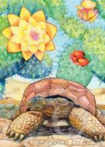 Desert Tortoise Notecard