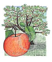 Apple Tree Lokta Card