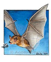 Big Brown Bat Lokta Card