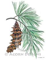 White Pine Lokta Card