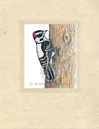 Downy Woodpecker Lokta Card