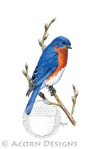 Eastern Bluebird Notecard