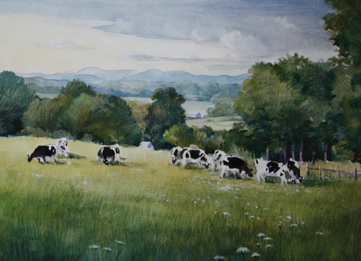 Summertime Cows