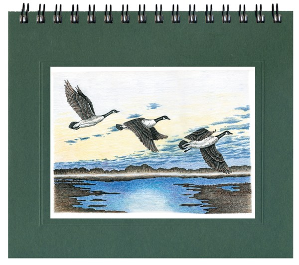 Canada Geese Journal