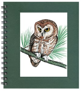 Saw-Whet Owl Notecard
