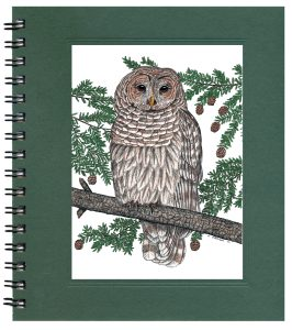 Barred Owl Notecard