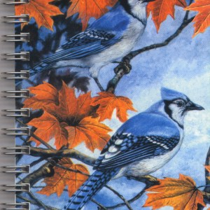Cover image - Blue Jay Mini Journal