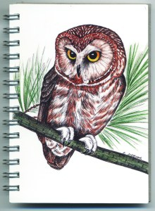 Cover image - Saw-Whet Owl Mini Journal