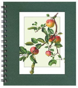 Apple Branch Notecard