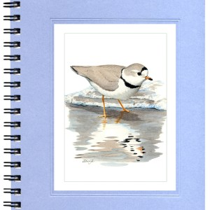 Piping Plover Notecard
