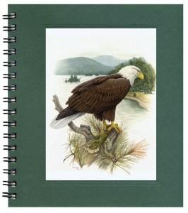 Bald Eagle Bargain Notecard