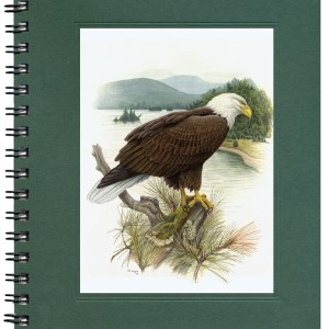Bald Eagle Bargain Notecard